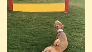 Brown dog lays on grass near yellow fences