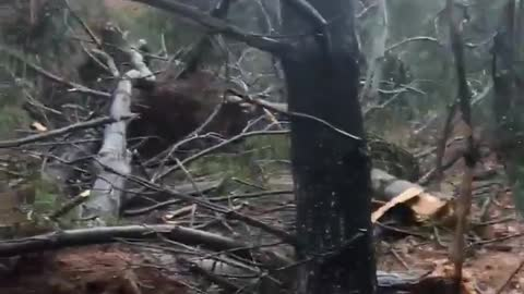 Trees decimated as tornado touches down in Maryland