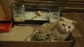 Gato y tortuga comparten improbable amistad - Video