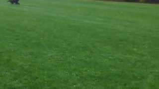 Dog takes out girl in park