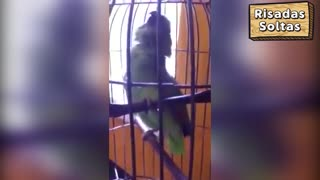 Parrot cries like a child