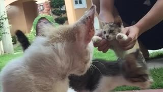 The cat hits his head on the Camera