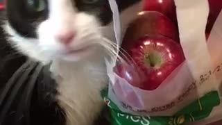 Cat plays with bag of red apples