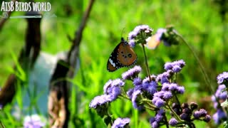 Close look of Butterfly on flowers with beautiful wings