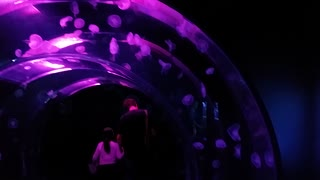 Cool Jelly Fish Tank!!! - Video