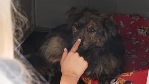 Girl's Hand Touches the Dog's Nose