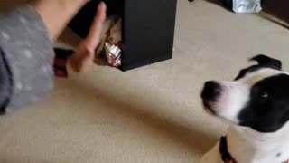 My dog giving me a High 5