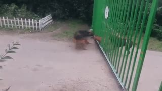 Dogs Stop Fighting