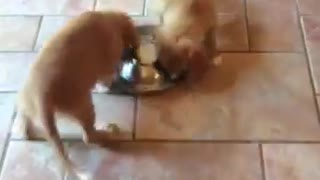 Adorable puppies pinwheel during meal time