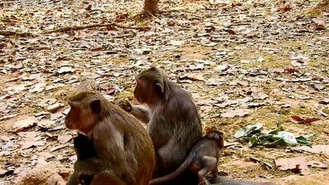 Monkey lived in the jungle they very good monkey mom and baby