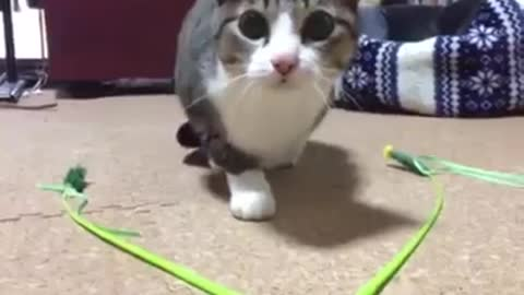 This Kitty is coming at you