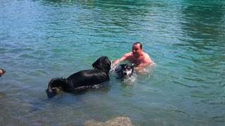 Dog's First Swimming Lesson Leads Him Back To Shore