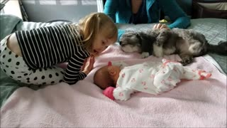 Little girl introduces dog to new baby sister - Video