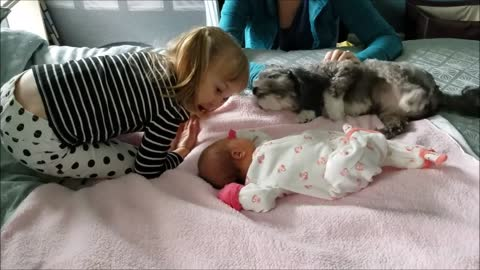 Little girl introduces dog to new baby sister