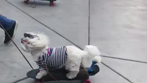 Adorable skateboarding dogs will brighten your day!