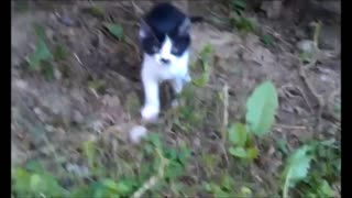 Hyperactive yet cute kitten - Video