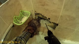 Cat Stuck in a Bathroom Wall - Video