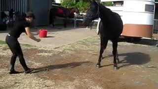 EXTREMELY COOL Dancing Horse - Video