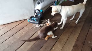 This Has To Be The Most Unlikely Animal Friendship We've Ever Encountered. See Why! - Video