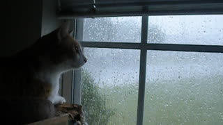 Fearless cat unfazed by extremely violent storm - Video