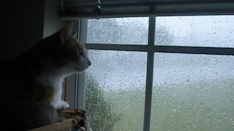 Fearless cat unfazed by extremely violent storm
