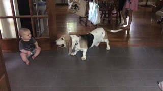Basset Hound preciously entertains laughing baby