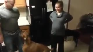 Dog Protecting Pregnant Mom - Video