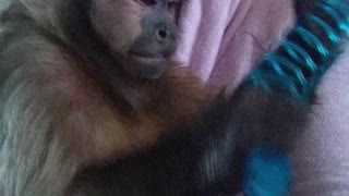 A Monkey and his slinky  - Video