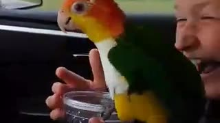 Parrot decides to take bath in kid's water cup