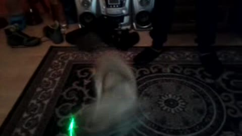 Doggy playing with green alien laser