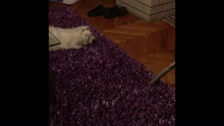 Puppy doesn't trust vacuum cleaner