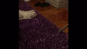 Puppy doesn't trust vacuum cleaner - Video