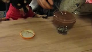 Cute Doggy Sharing Birthday Celebration Dessert - Video