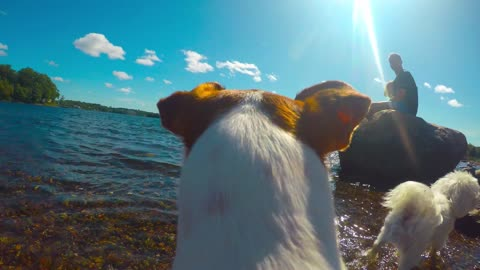 POV of Dogs playing at Dog Park - GoPro