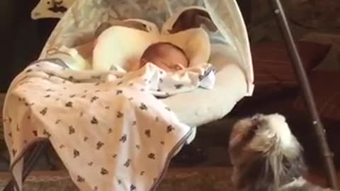 Curious puppy tries to get baby's attention in bassinet swing