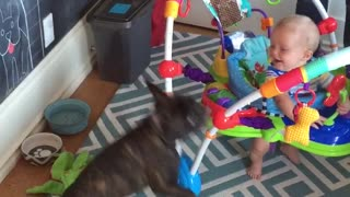 Baby screams in delight at balloon-obsessed dog - Video