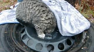 Cat Stuck In Tire Frame - Video
