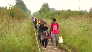 Migrants cross Serbia-Hungary border on foot - Video
