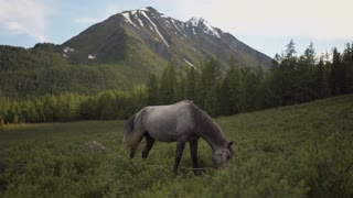 The horse eats green grass in large places.