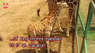 Zoo Welcomes New Arrivals - Video