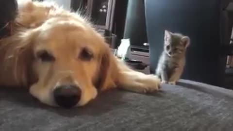 The big dog love very very kitty
