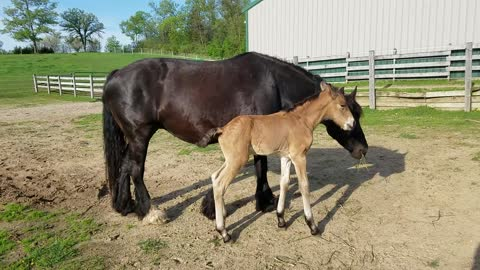 Adorable 2 day old colt
