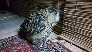 I'm Starting with the Owl in the Mirror - Video
