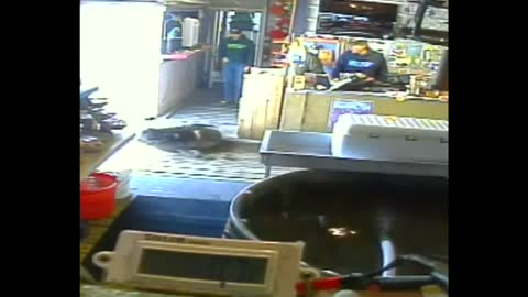 Hungry harbor seal attempts to steal from Oregon store