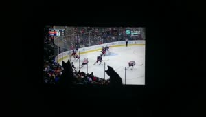Kittens enjoy watching hockey - Video