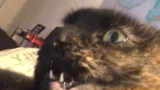 Mouth on Cat Won't Close