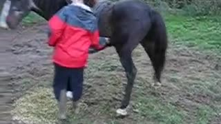 A Very Itchy Horse - Video