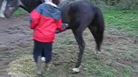 A Very Itchy Horse