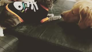 Doggy takes kitten punches  - Video