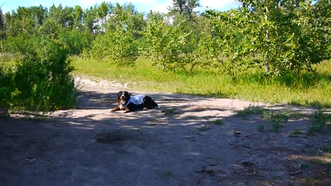 Dog has priceless reaction to off-leash park
